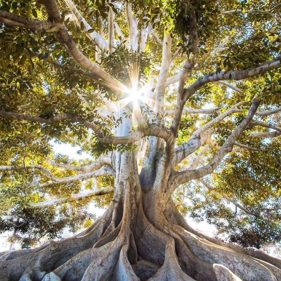 Empathic Healing Evangelica