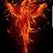 Phoenix Answers