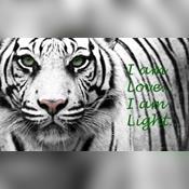 Light Warrior27
